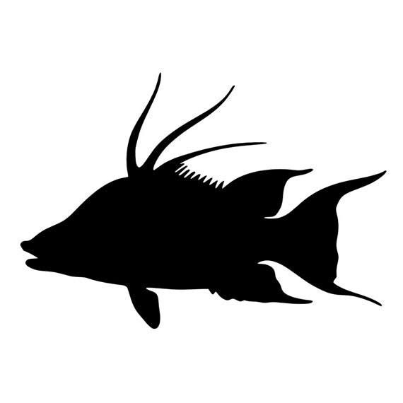 Hogfish Vinyl Decal
