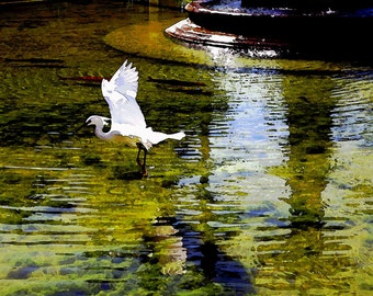 Watercolor White Crane Flying Fountain Ripples Water Koi Light Color Fine Art Photograph Print Photography Digital Painting