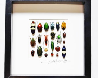 Artframe with real insects : Topquality insect frame with beautiful insects of the world, FREE SHIPPING