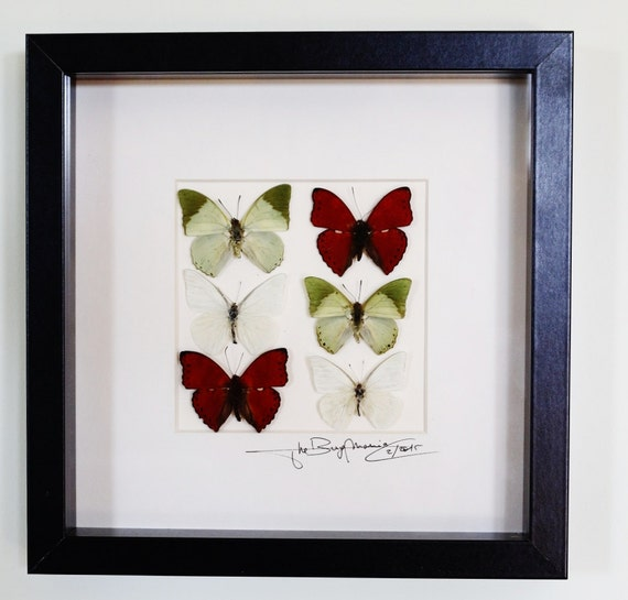 Artframe with real insects : Topquality display  Mosaic  with beautiful butterflies