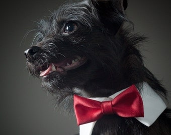 Ruby Red Bow Tie for Dogs & Cats