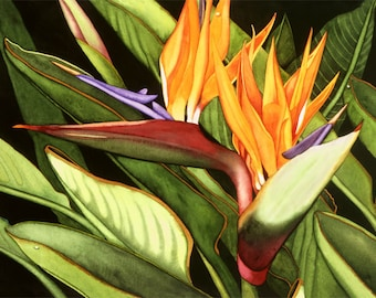 Watercolor painting...TWINS...bird of paradise...giclee