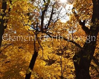 Autumn Leaves, Instant Download, 11x14, Fine Art Digital Photo, Digital Printable, Photography, fall leaves, sunshine