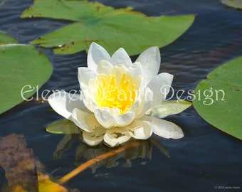 Water Lily, Instant Download, 14x11, Digital Printable, Fine Art Digital Photo, Photography, flower photo