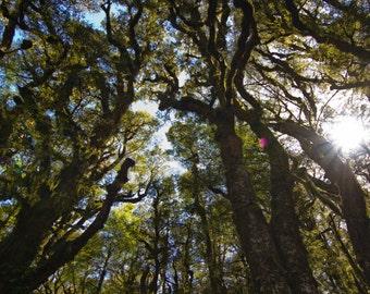 Maori Trees Photography, Vista, Landscape, New Zealand, Green, Trees, Sun, Sky
