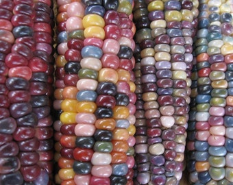 Glass Gem Indian Corn Heirloom Seeds, Vegetable Seeds, Naturally Grown in the Pacific NW