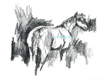 Horse Original Drawing Illustration Animal Portrait by California Artist Debra Alouise