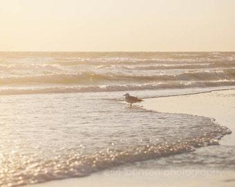 beach landscape photography, seagull photograph, beach cottage art, orange home decor, beach sunset, nature photography, bird photo