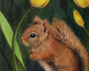Red Squirrel and Flower Art Melody Lea Lamb ACEO Print #374