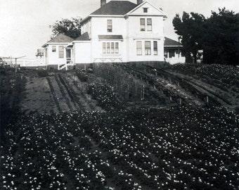 Vintage photo 1915 Home Estate A VAn Duzer Loleta Humboldt Co CA