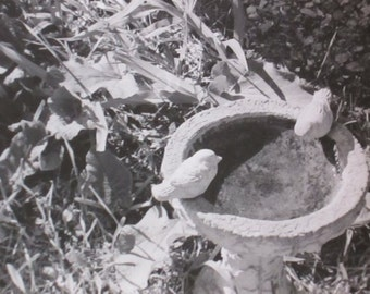Black and White Birdbath  with Cement Birds Photograph