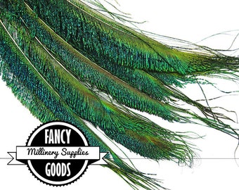 10 - Peacock Swords -  Feathers - Millinery