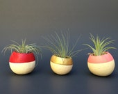 Air Plant Pod trio - red, gold, pink