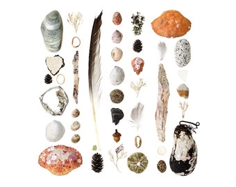Beachcombing series No.84 - 12 x 12 photograph - feathers, beach stones, seashells, crabs