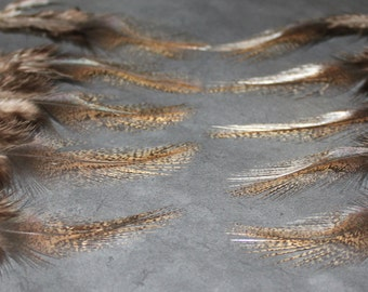 20 Coq De Leon Rooster Craft Feathers