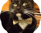 Bell Add-On for Bow Tie Style Collars >> Silver, Gold or Red | Chariots Afire Pet Costume Cat Halloween Kitten Collar Dr Who Kitty