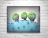 Cactus Blue, Purple, Prickly Pear, Arizona Desert Art, Cactus Art, Violet, Nature Photography, Cactus Wall Picture, Santa Rita Mountains