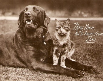 "Vintage Dog, Cat Postcard -""Cat and dog. Good Friends"" Nice antique English postcard - Real Rotograph post card"