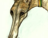 Dog Art - Greyhound -  Print