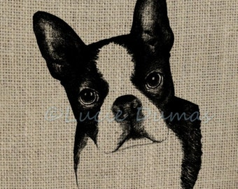 Digital Download Graphic Design Clipart Transfer Dog 128 Boston Terrier Animal from art by Lucie Dumas