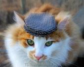 Driving Hat - Newsboy Newsie Cap Ivy Cap for Cats - Flat Hat - Golf cap, Jeff cap, Cheese-cutter