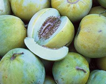 Heirloom Melon - Sakata's Sweet 25 Seeds