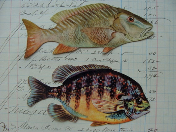 Rare 1900s victorian die cut fish trading cards nautical lot for Fish die cuts