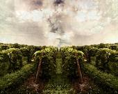 Vineyard Vines, Vineyard Art Print, New York art, canvas landscape print