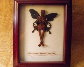 Dead fairy - mummified specimen prop in frame