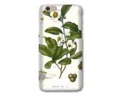 Tea iPhone 6S Case, Botanical Tea iPhone SE Case Tea Leaf iPhone 5C Case Tea Leaf iPhone Case Gifts for Tea Lovers iPhone 6 Plus Case
