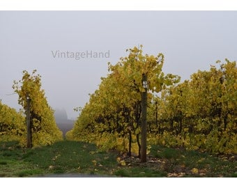Foggy Vineyard Digital download / Fall Harvest / fog grass trees / rustic / vines / wine country / Photograph / Art download / Home Decor