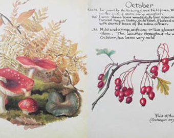 Vintage Print. Toadstools vintage book print. Botanical book plate. Vintage Paper, Drawing from naturalists diary.