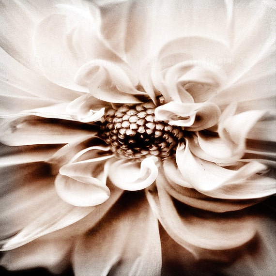 Nature Art Print / Flower Photograph / Home Decor / White Wall Art / floral photo / creme / grey / smoke / botanical decor / fine art print