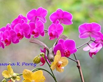 Warbler Bird in Orchids Photo