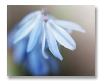 Blue Flower Photograph, Bluebell Flower Home Decor, Spring Blue Flower Print, Cottage Chic Decor, Soft Blue Art, Blue Bedroom Decor 8x10