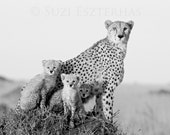 Baby Animal Photography, ...
