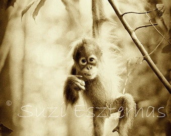 JUNGLE BABY ANIMALS, Set of  3 Sepia Photo Prints, Baby Orangutan, Baby Gorilla, Baby Chimpanzee, Wildlife Photography, Safari Nursery Art