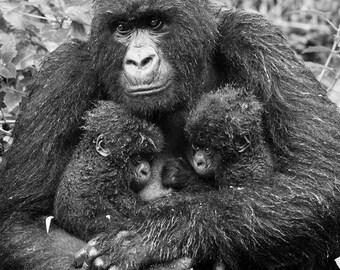Baby Animal Twins Photo, Mom & Baby Gorilla Black and White Print, Baby Animal Photography, Wildlife Photography, Kids Room, Nursery Art