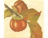 Persimmons, Original Aquatint Etching