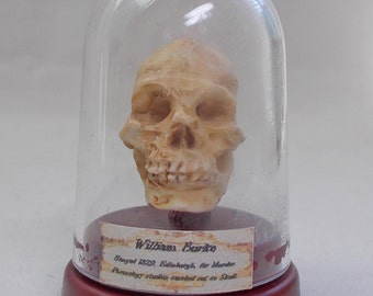 Dolls house miniature Phrenology Skull of William Burke the Body Snatcher