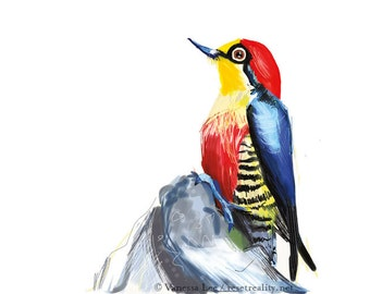 Yellow Fronted Woodpecker Bird Digital Drawing Print, Original Wildlife Art Postcard YFW