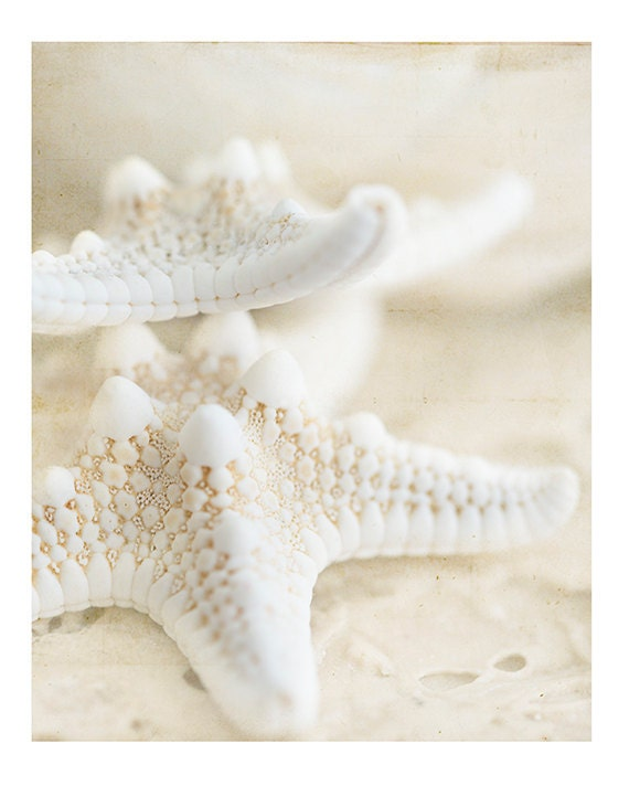 Nature Photography, Shells, Starfish, Macro, Naturals, Print