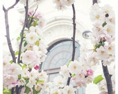 Cherry Blossoms in White, Paris - April in Paris, Montmartre, white, pink, gray, pastel - 8x12 and larger - Original Fine Art Photograph