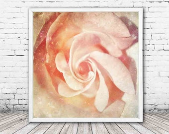 pastel pink rose print - flower photography - floral wall art - flower photos