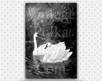 Clip Art Swans Vintage Print Black and White Graphic 1920's Printable Digital Instant Download Scrapbooking