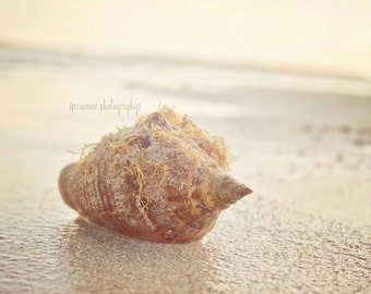 Conch Shell Print, Seashell Art Print, Seashell Photography, Beach Photography, Key West Art, Beach Print, Seashell Decor, Neutral Art