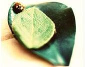 Ladybug, green leaves, Louisiana, Little stowaway,  fine a print