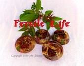 Fertile Life Orgonite Disc -Bloom-Grow-Creativity-Passion-Abundance-Fertility - with Living Ingredients