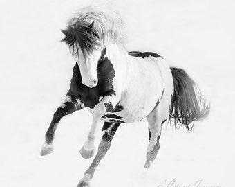 Painted Desert Leaps - Fine Art Wild Horse Photograph - Wild Horse - Black Hills Sanctuary - Fine Art Print