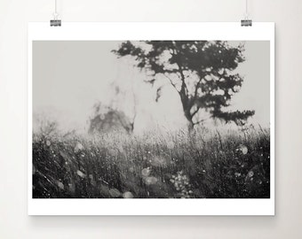 black and white photography nature photography winter photograph tree photograph surreal photograph grass photograph nature print